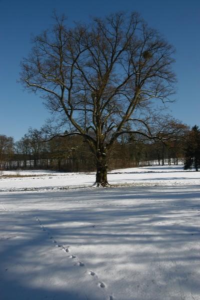 boominsneeuw